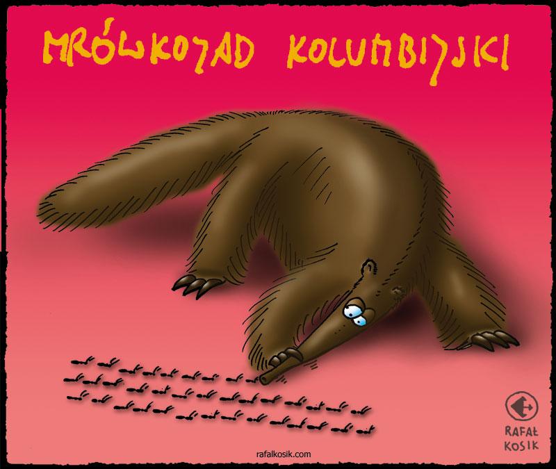 Mrówkojad kolumbijski (źródło: http://rafalkosik.com/?cat=9)