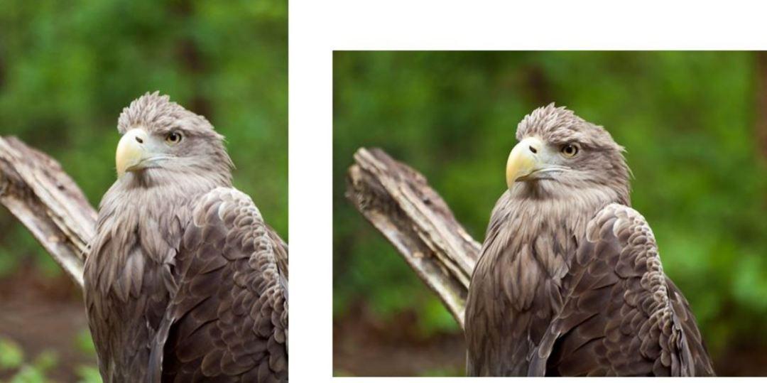 Porównanie kadrowania poziomego i pionowego przy tych samych elementach na zdjęciu.
