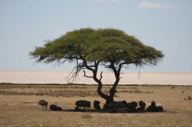 Safari in Namibia - Etosha Park