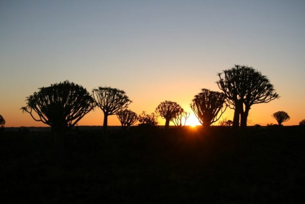 Namibia - Quiver Tree Forest