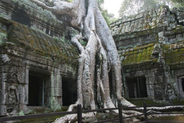 Uno degli angoli più fotografati del tempio Ta Prohm
