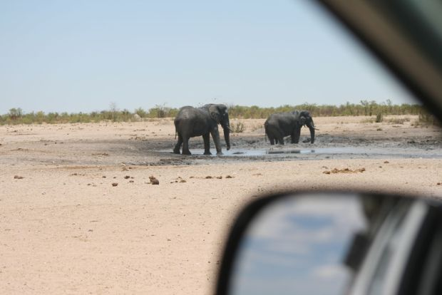 Guidare all'interno del Parco Etosha