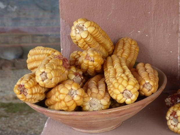 Una specialità dello street food peruviano: il choclo arrostito