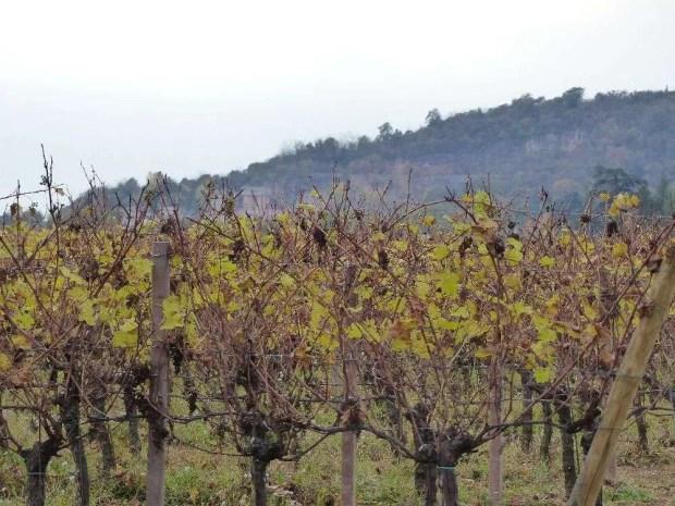 Itinerario in Friuli Venezia Giulia - Il collio friulano in autunno