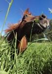 Banner the wild grass-eater