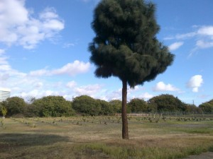 Furuta farmland today.