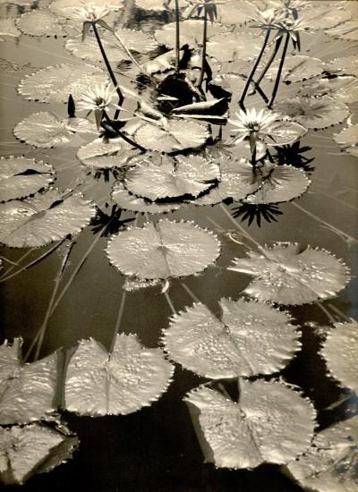 """Asahachi Kono, """"Pond Fantasy,"""" c. 1930. Gelatin silver print. Collection of the Kono family."""