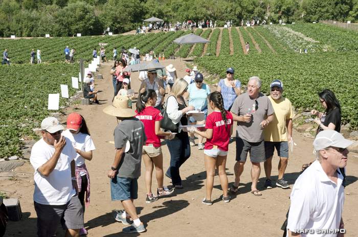 農園内を散策しながら野菜や果物を試食する参加者