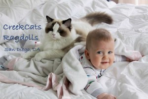 Creekcats Ragdoll with baby