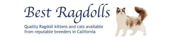 bestragdolls-banner