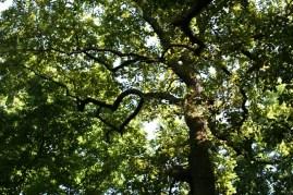 Coeur dessiné par des branches