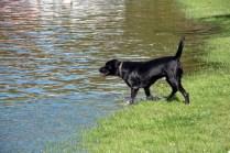 Gandalf, notre nouveau copain chien