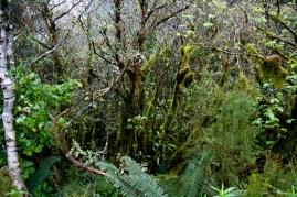 Wilmot Pass – La végétation sur le bord de la route