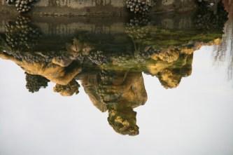 Réflexion du bassin de Bacchus