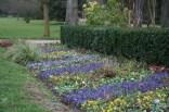 Parterre de fleurs hivernales dans le jardin du Roi