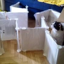Le labyrinthe pour chat (mais à part ça on monte des meubles)