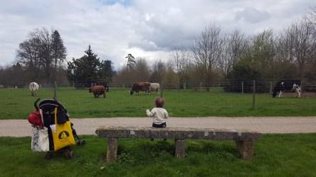 Du côté des vaches (quelques jours plus tôt)
