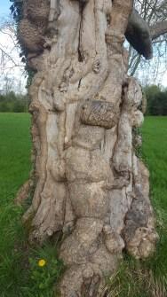L'arbre au croco