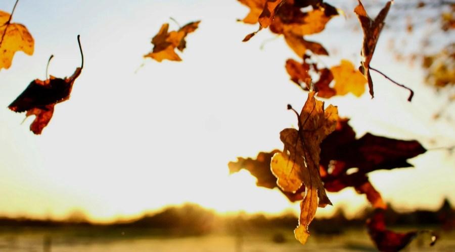 Sei mir willkommen, lieber Herbst!
