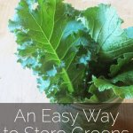 An Easy Way to Store Greens (And A Little Tale of Garden Woe…)