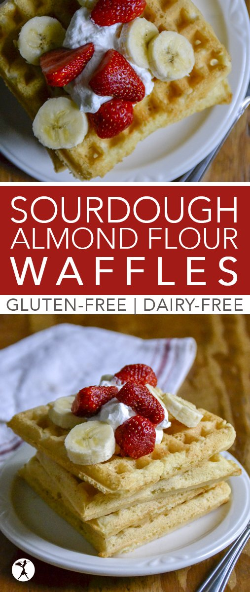 Sourdough Almond Flour Waffles are a perfectly fluffy and delicious meal to enjoy for breakfast! They're gluten-free, dairy-free, and have a grain-free option, as well.