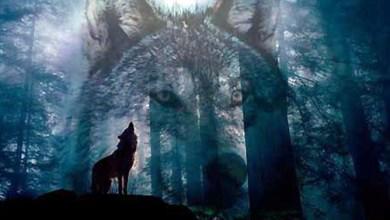 صورة الذئب في سلوم العرب