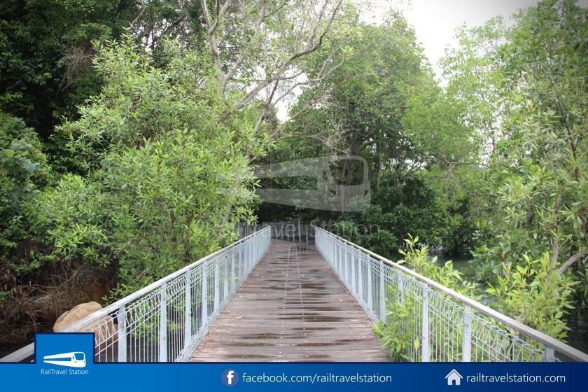Chek Jawa Wetlands 023