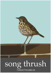 song-thrush-design-karen-wallace-1