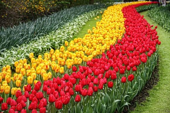 Amsterdam tulips, Eurostar