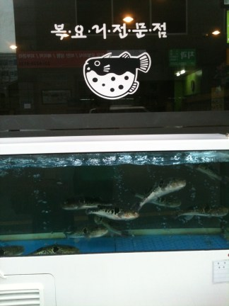 Fugu, or blowfish, a potentially dangerous delicacy.