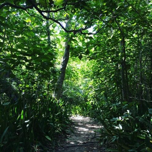 Into the jungle! Photo by Sanae Koike.