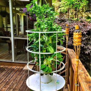 tower-garden-on-deck