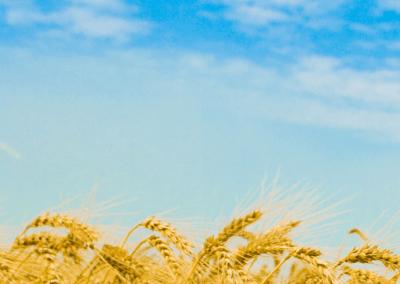 ЧТО ТАКОЕ ГМО И ЗАЧЕМ ОНИ НУЖНЫ 3