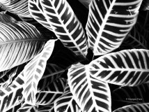 Leaves, Kew Gardens, London