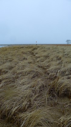 path through the marram