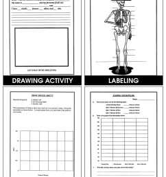 The Human Body - Grades 4 to 6 - eBook - Lesson Plan - Rainbow Horizons [ 1165 x 900 Pixel ]