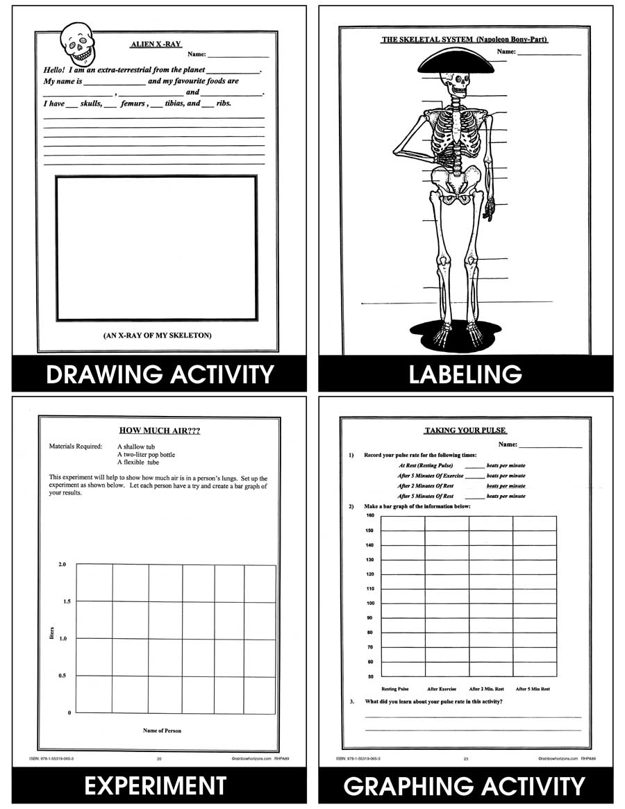 hight resolution of The Human Body - Grades 4 to 6 - eBook - Lesson Plan - Rainbow Horizons