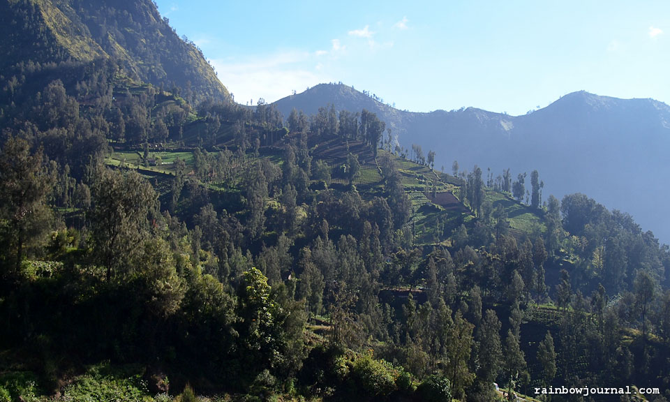 A view on our way to Mt Bromo in Indonesia