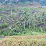The Subak is the water management system for the paddy fields of Bali