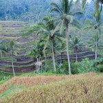 The Subak was recently listed as a UNESCO World Heritage Site
