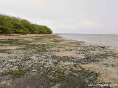 Tandoyong Island's beach is laden with sea grass