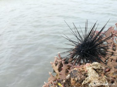 Better bring aqua shoes when you go to Tondol White Sand Beach. There are a lot of sea urchins.