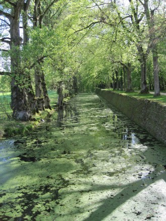 Spring green on the way to Chenonceaux