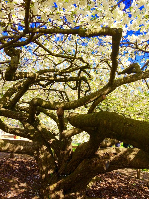 Tree at Jardin des Plantes