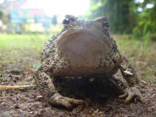 Prinz oder Frosch? - Juli