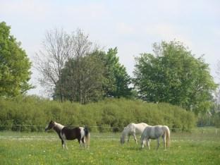 Meine Pferde auf der Weide - Mai