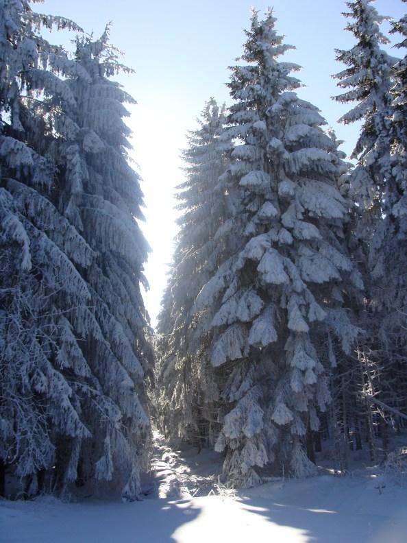 Einfach Narnia... :)
