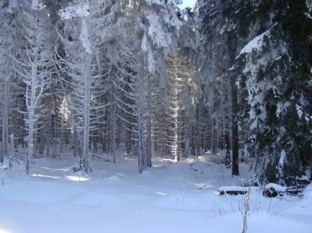 Schneewunder