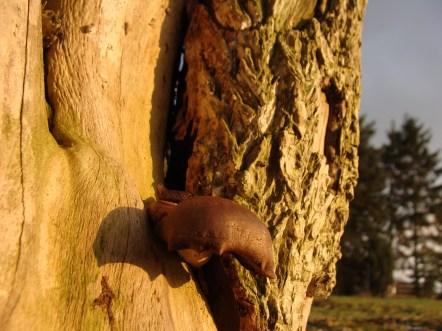 Und noch ein Pilz