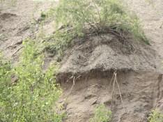 Sandgesicht...